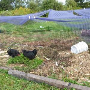 chicken run cover
